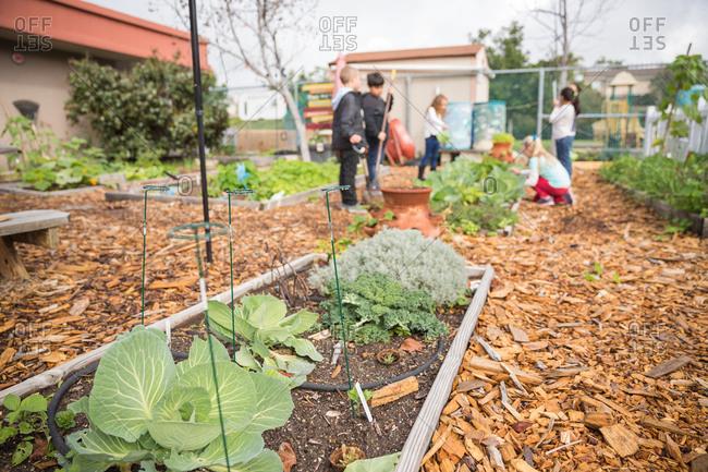 School children tend to an outdoor garden at school.