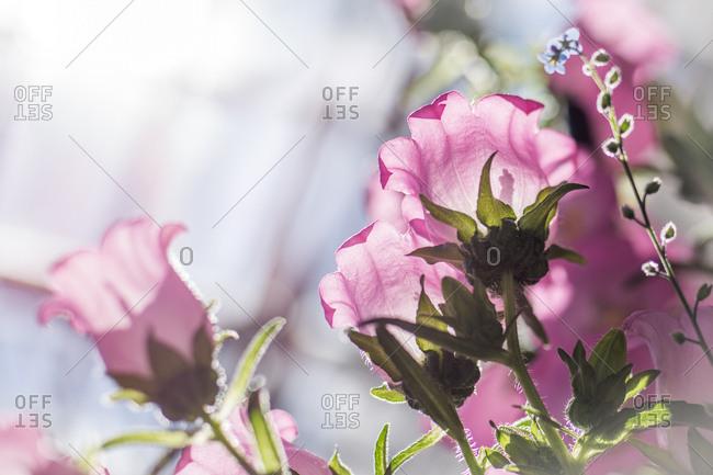 Pink flowers in sunlight