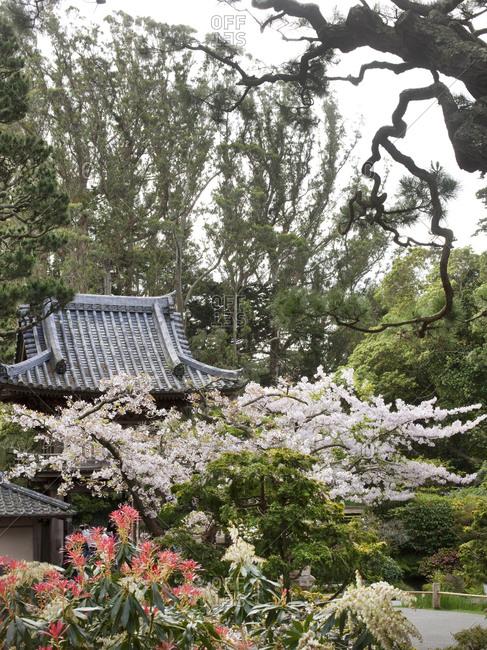 Flowers blooming in Japanese Garden in Golden Gate Park
