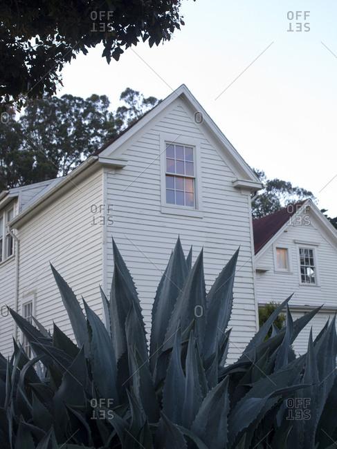 Large succulent plant in a garden in Presidio neighborhood of San Francisco