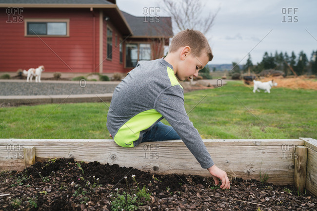 Boy weeding raised garden bed