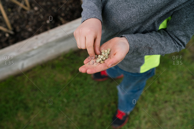 Boy with handful of seeds for planting