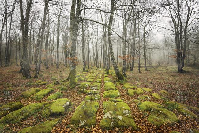 Spain- Burgos- moss-grown rock pathway in autumn forest