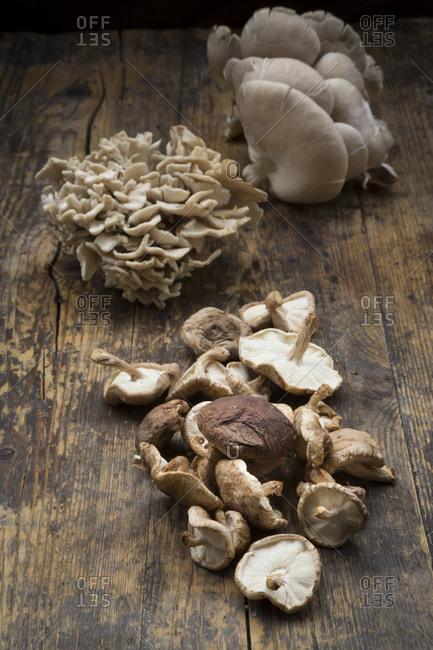 Maitake- Shitake and Oyster Mushrooms on dark wood