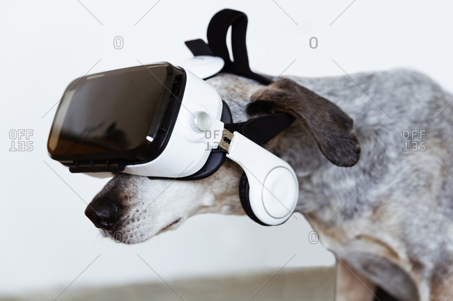 Mongrel wearing Virtual Reality Glasses