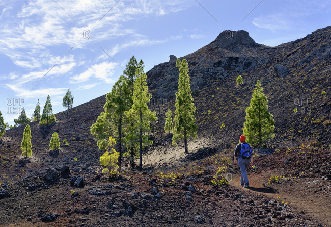 Spain- Canary islands- Tenerife- woman on hiking trail- Montana Negra or Volcan Garachico- near El Tanque