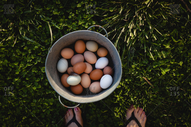 Little girl's feet and freshly collected eggs in a pail