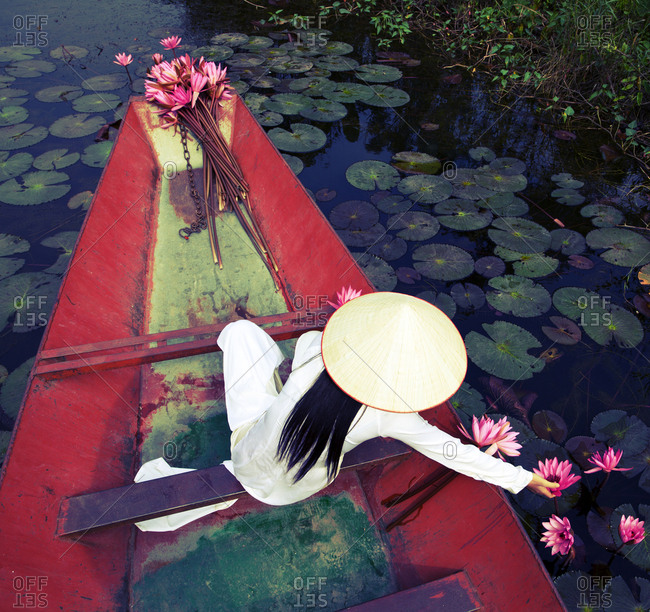 Vietnamese woman wearing traditional costume, picking lotus flowers in lake