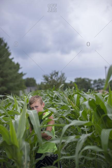 Boy hiding in cornfield