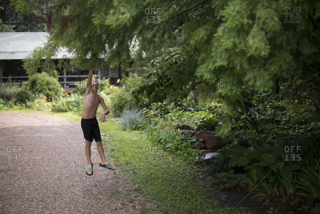 Boy leaping for leafy branch