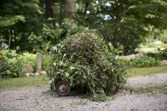 Pulled plants in a wagon