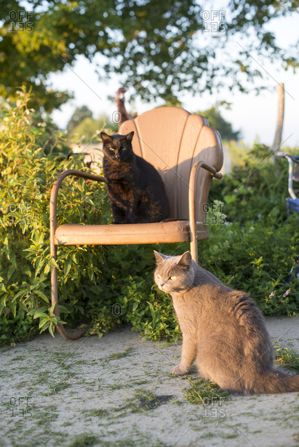 Two cats sitting in summer yard