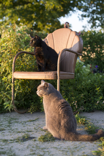 Two cats sitting in summer sunlight