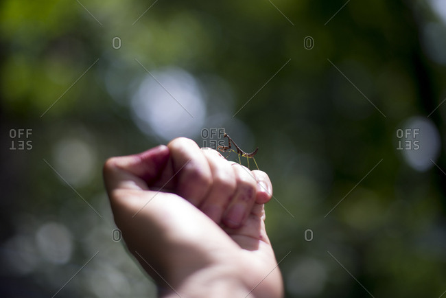 Praying mantis on a hand