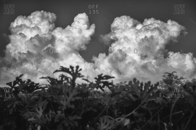 Clouds in sky behind summer plants