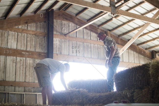Man watching boy lift hay