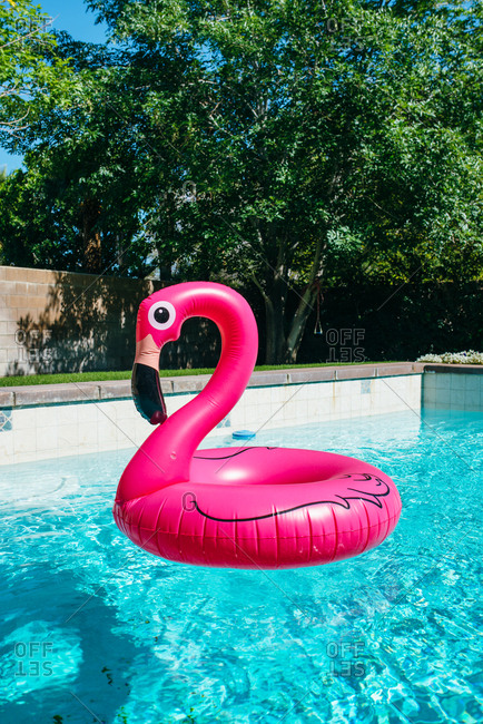 Flamingo float in pool