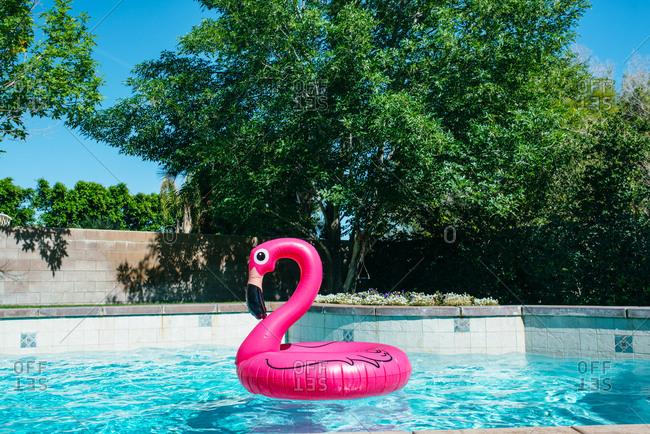 Flamingo float in swimming pool