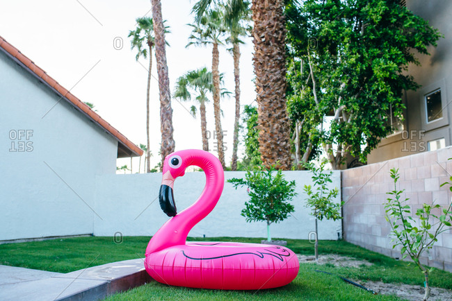 Flamingo float in walled backyard in Palm Springs