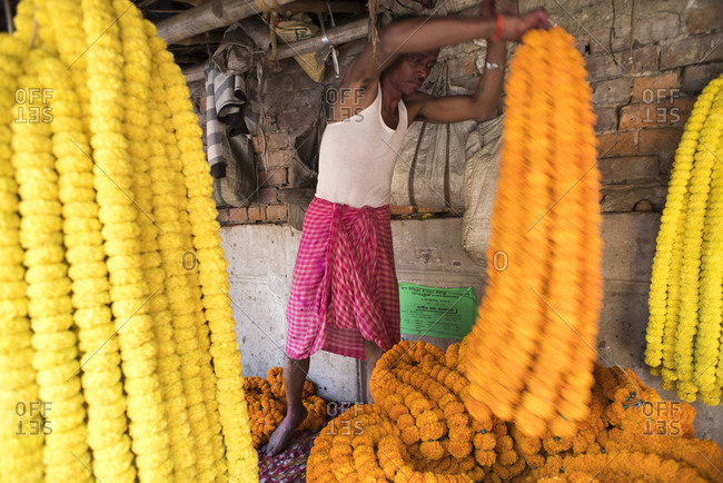 Kolkata, India - March 13, 2017: Man sorting flower garlands at a flower market in Kolkata, India