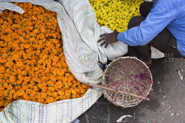 Man sorting marigolds at a flower market in Kolkata, India