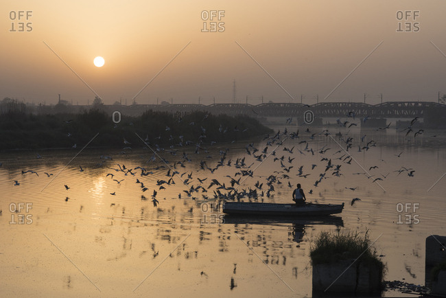 Man feeding birds from a boat on the Yamuna River at sunrise in Delhi, India