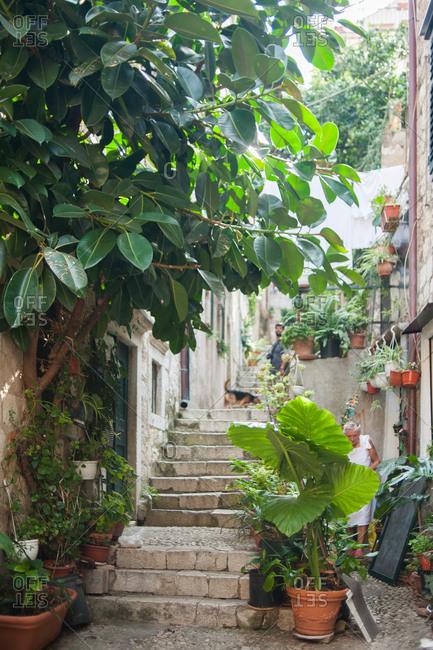 Plants surrounding steps in residential neighborhood in Dubrovnik, Croatia