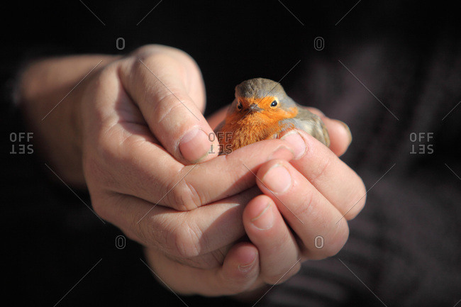 France, Robin in the palm of the hand