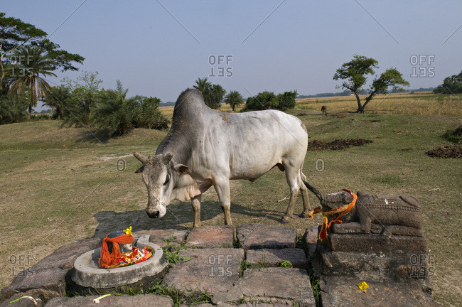India, Orissa, Kendraparha district, Hindu village, Nanti, altar of the village