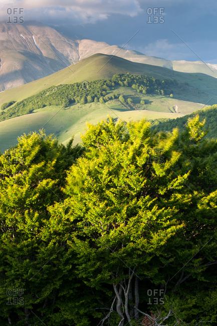 Rolling landscape of Castelluccio di Norcia, in the background the Vettore mountain, Italy