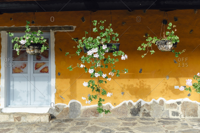 Climbing plants against an orange chipped wall in Represa del Sisga, Colombia