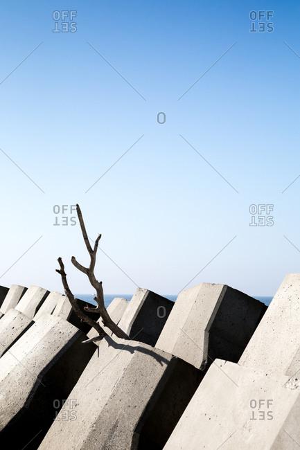 A branch in blocks by sea