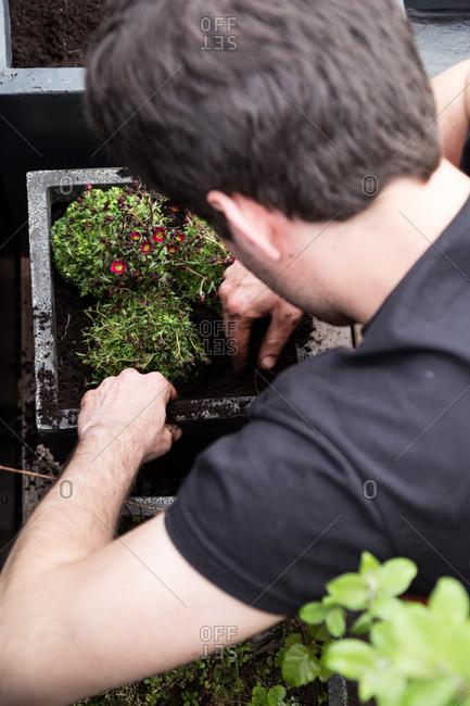 Man potting flower plants