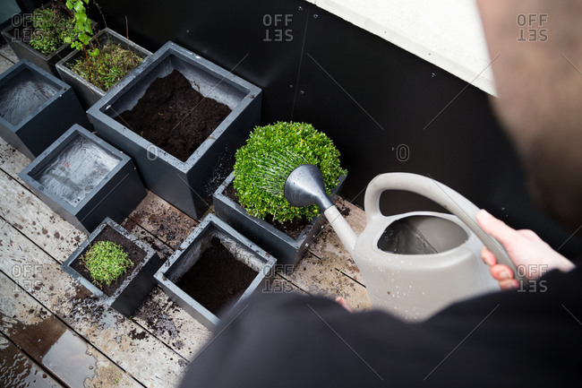 Man watering newly potted plants