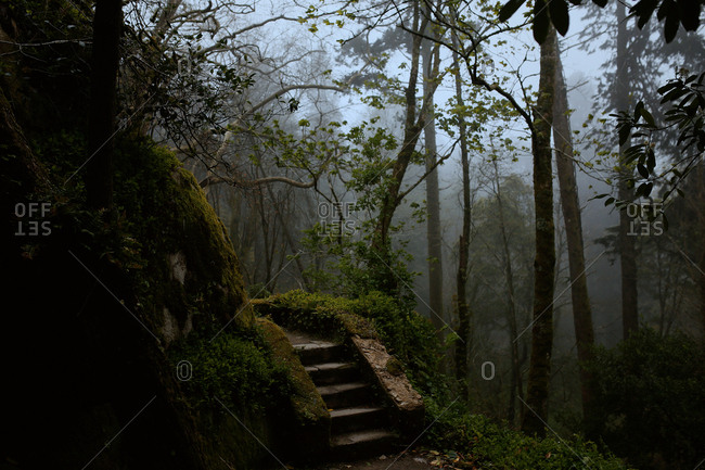 Moss covered trees and steps in the Sintra Mountains
