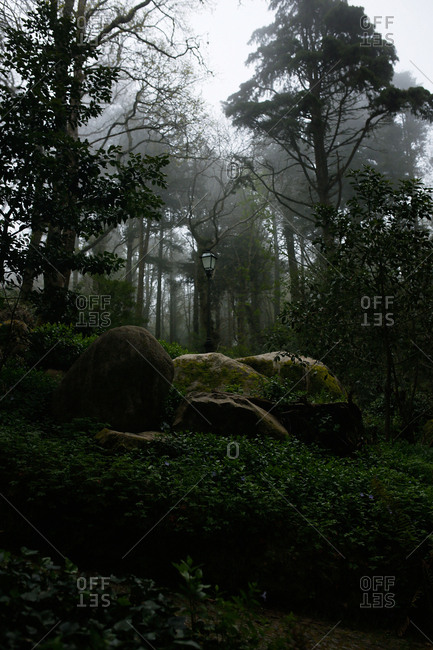 Lamppost in a dense forest in the Sintra Mountains