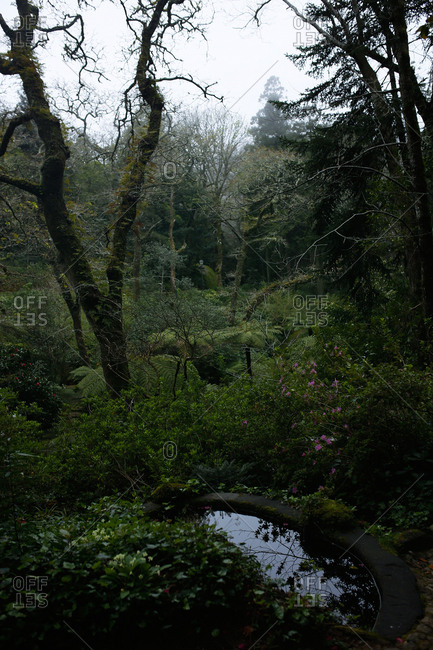 Garden with pond in the Sintra Mountains