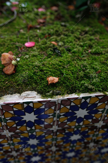 Moss growing on top of colorful tiles in the Sintra Mountains