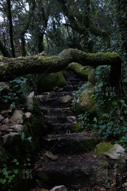 Winding steps in the Sintra Mountains