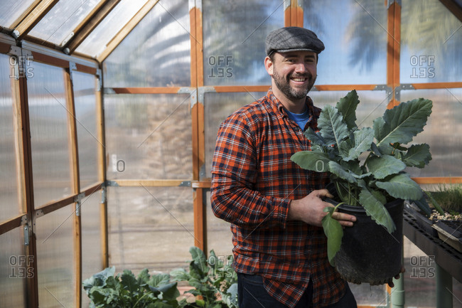 Portrait of man holding leaf vegetable plant while standing in greenhouse