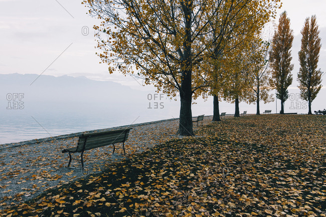 Empty benches on footpath by lake during autumn