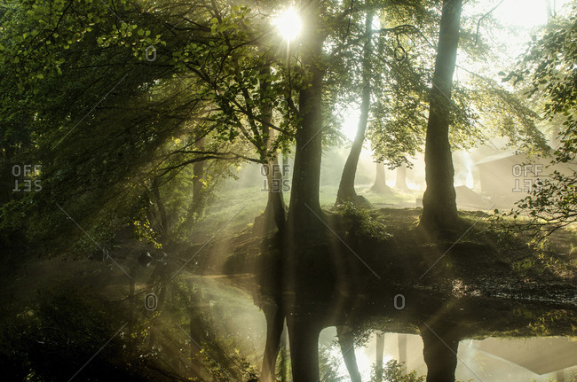 Scenic view pond in forest during sunny day