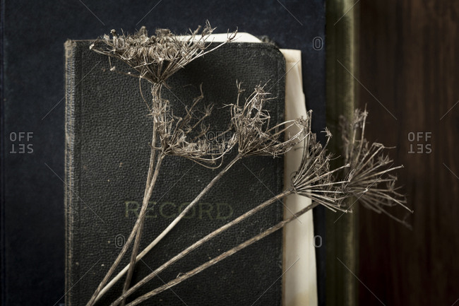 Close-up of dry plants with diary and books on wooden table