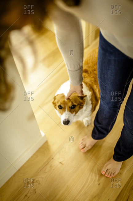High angle view of woman stroking dog while standing at home
