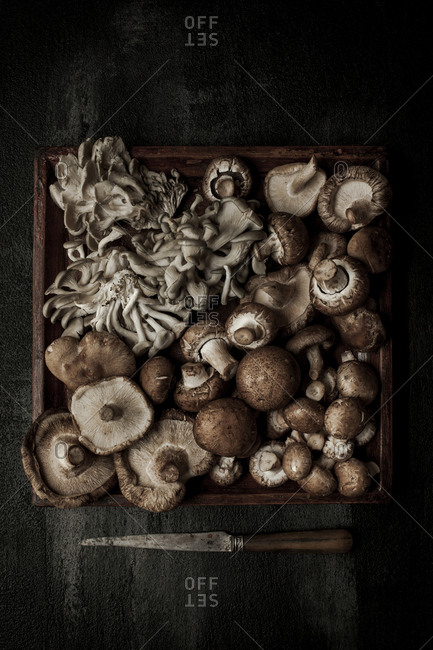 Overhead view of mushroom in tray with knife on table