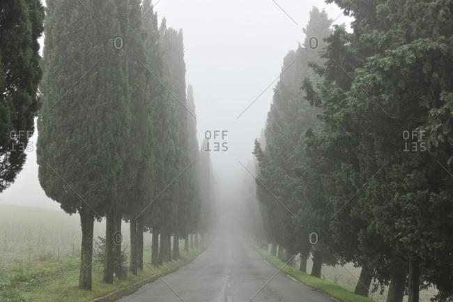 Italy, Tuscany, Barberino di Mugello . road to Panna