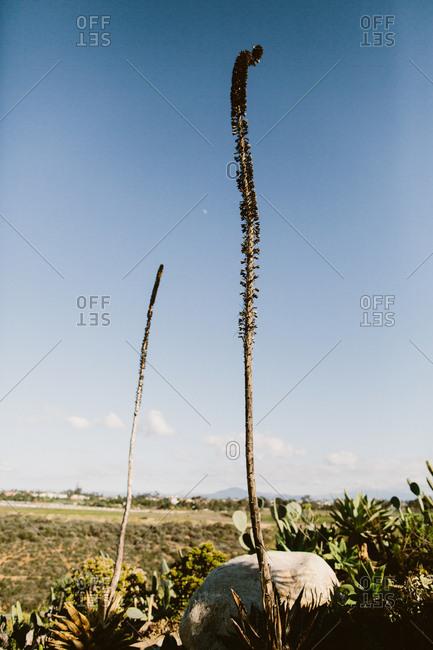 Plant landscape scene with blue sky