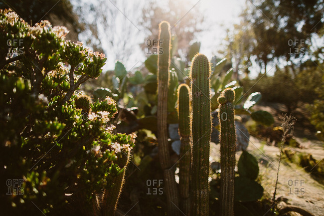 Cacti and greenery in the sunlight