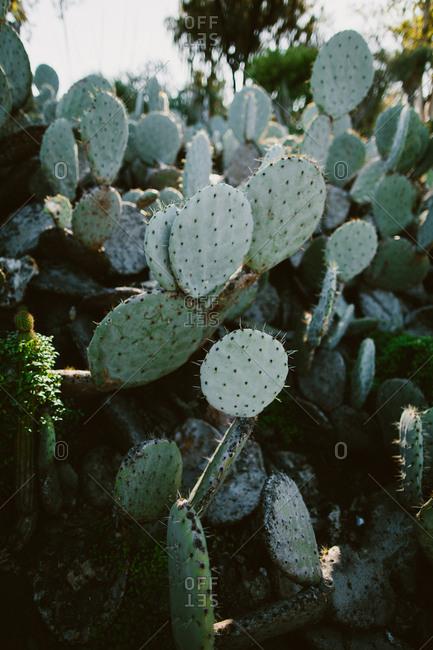 Close up of cactus in desert