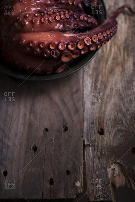 An octopus tentacle